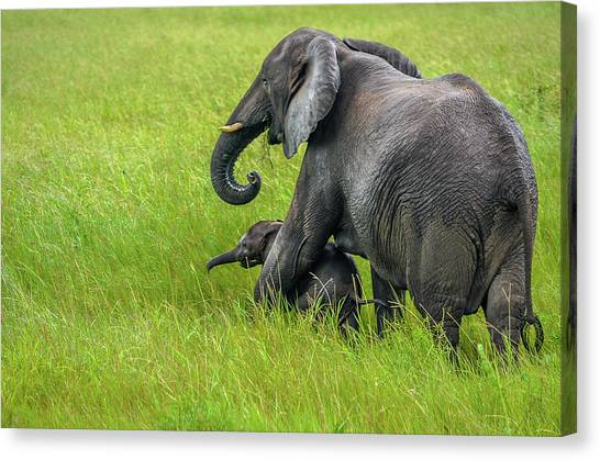 Protective Elephant Mom Canvas Print