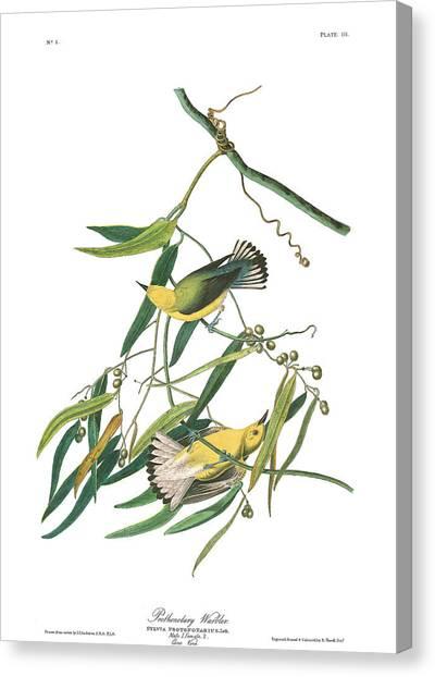Warblers Canvas Print - Prothronolary Warbler by John James Audubon