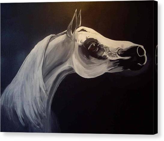 Proud Arabian Stallion Canvas Print by Glenda Smith