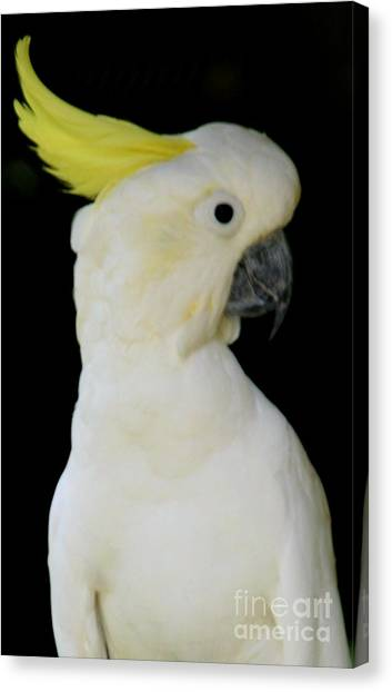 Proud Cockatoo Canvas Print