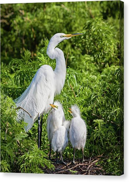 Proud Momma Canvas Print