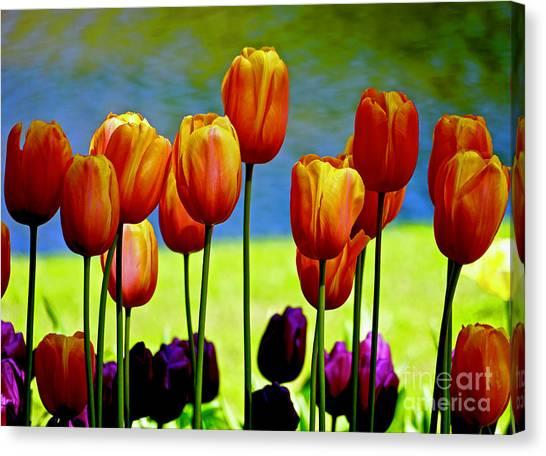 Proud Tulips Canvas Print