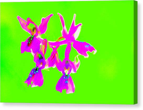 Green Provence Orchid  Canvas Print