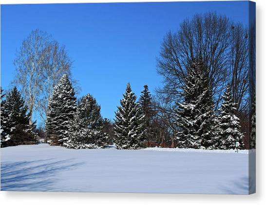 Provincial Pines Canvas Print