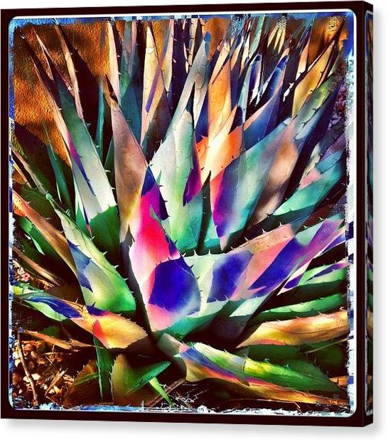 Iphoneonly Canvas Print - Psychedelic Agave by Paul Cutright