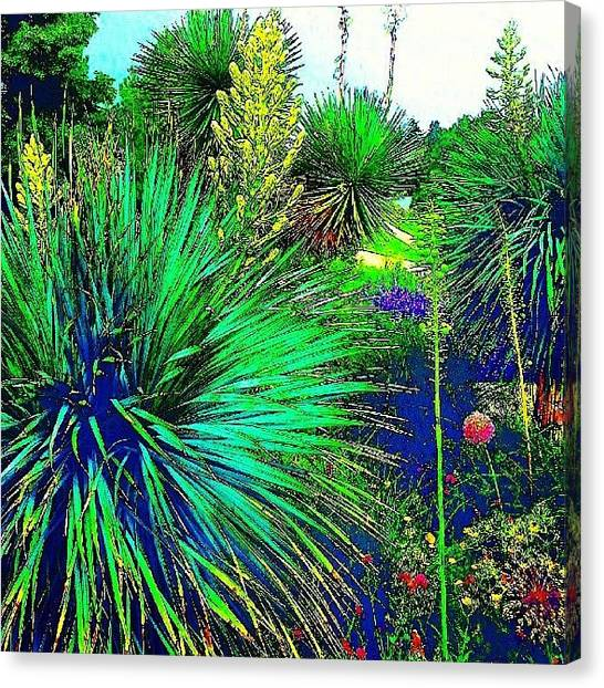 Surrealism Canvas Print - Psychedelic Yuccas. #plant #yucca by Austin Tuxedo Cat
