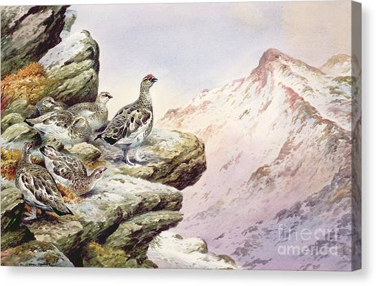 Mountain Cliffs Canvas Print - Ptarmigan On The High Tops by Carl Donner