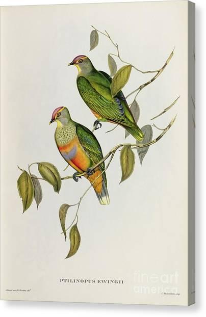 Lovebirds Canvas Print - Ptilinopus Ewingii by John Gould
