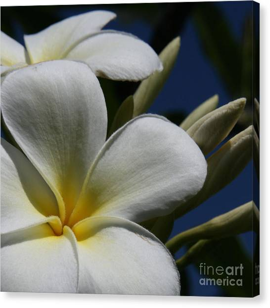Pua Lena Pua Lei Aloha Tropical Plumeria Maui Hawaii Canvas Print