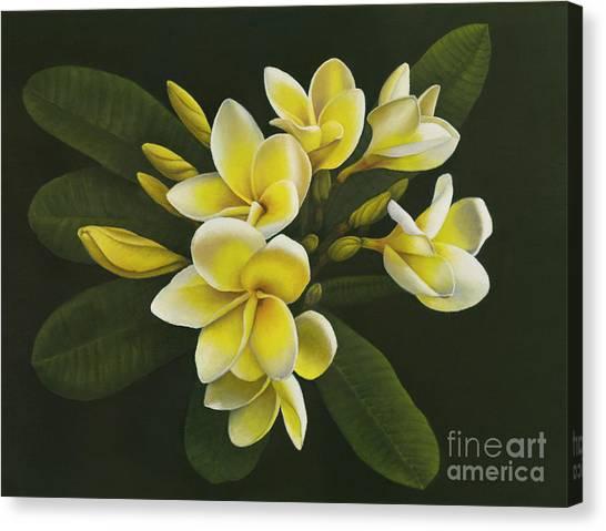 Canvas Print - Pua Melia by Peggy McKinsey
