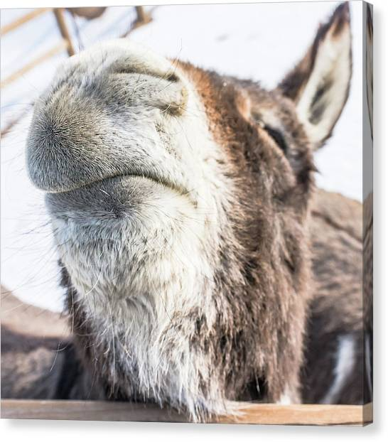 Pucker Up, Baby Canvas Print