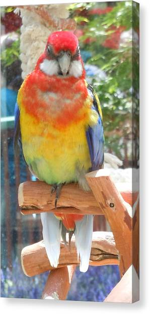 Multi-color Pudgy Budgie Canvas Print