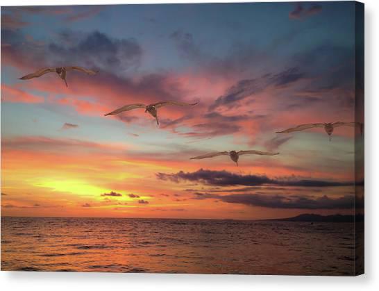 Puerto Vallarta Pelicans Canvas Print