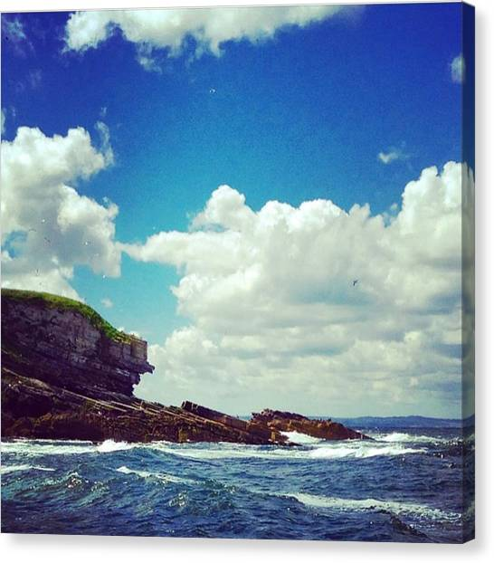 Puffins Canvas Print - Puffin Island - Anglesey by Unseen Moments