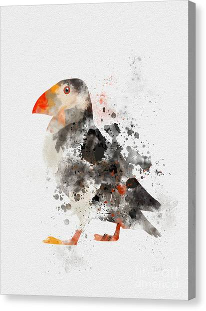 Puffins Canvas Print - Puffin by Rebecca Jenkins