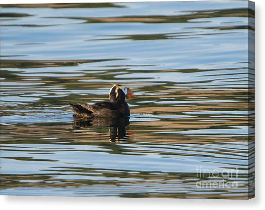 Puffins Canvas Print - Puffin Reflected by Mike Dawson