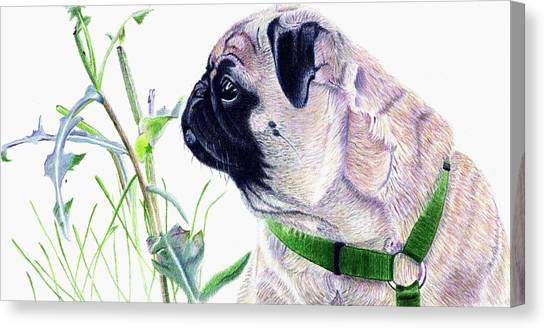 Pug And Nature Canvas Print