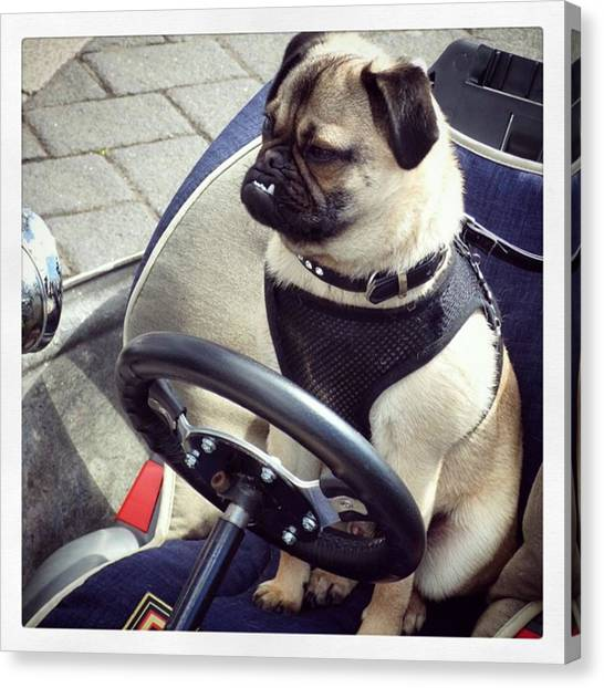 Steampunk Canvas Print - #pug #dog #driver #steampunk #car by Pamela Harridine