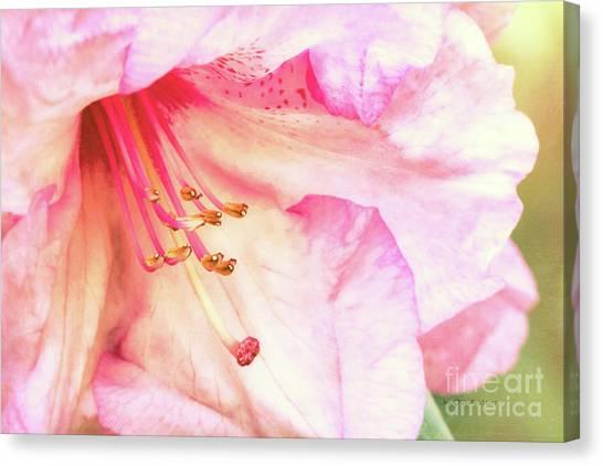 Puget Sound Rhododendron Canvas Print by Jean OKeeffe Macro Abundance Art