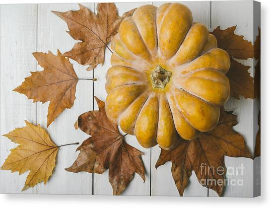 Thanksgiving Canvas Print - Pumkin And Maple Leaves by Jelena Jovanovic