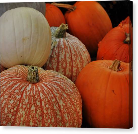 Pumpkin Colors Canvas Print by JAMART Photography