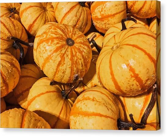 Pumpkin Harvest Canvas Print