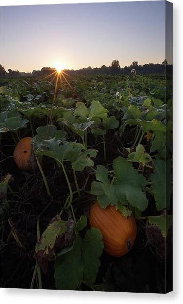 Pumpkin Patch Canvas Print - Pumpkin Patch by Aaron J Groen