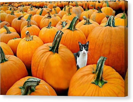 Pumpkin Patch Canvas Print - Pumpkin Patch Cat by Diana Angstadt