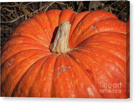 Pumpkin Patch Canvas Print - Pumpkin Season by Ana V Ramirez