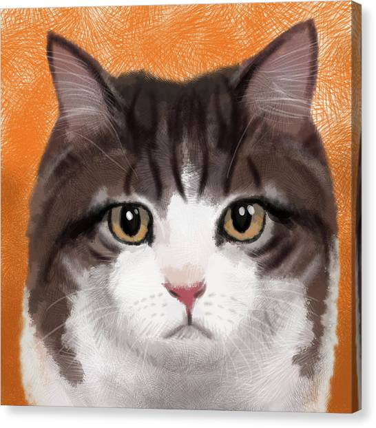 Manx Cats Canvas Print - Pumpkin Spice by Daniel Frey