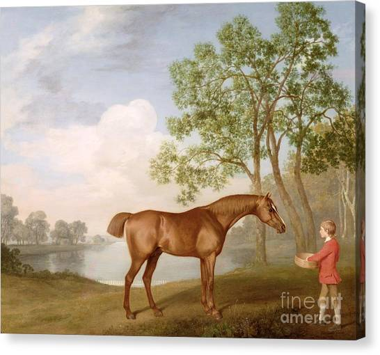 Race Horses Canvas Print - Pumpkin With A Stable-lad by George Stubbs
