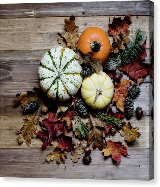 Thanksgiving Canvas Print - Pumpkins And Leaves by Rebecca Cozart