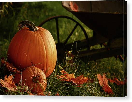 Pumpkins In The Grass Canvas Print