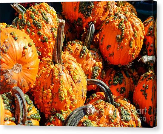 Pumpkins With Warts Canvas Print