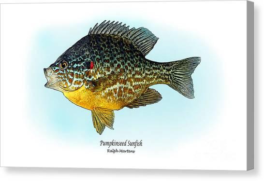 Angling Art Canvas Print - Pumpkinseed Sunfish by Ralph Martens