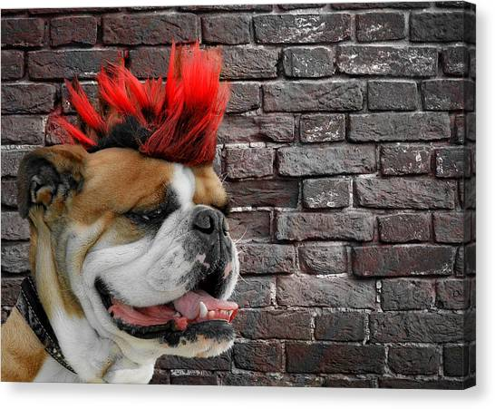 Mastiffs Canvas Print - Punk Bully by Christine Till