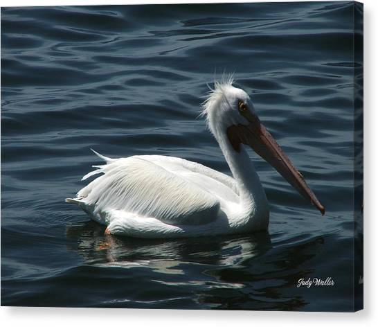 Punk Pelican - Side View Canvas Print by Judy  Waller