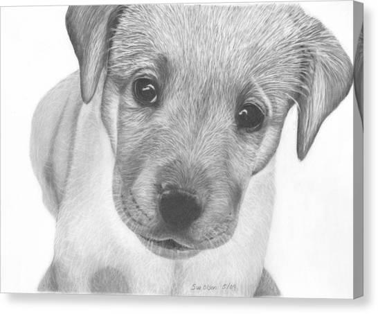 Pup Canvas Print by Sue Olson