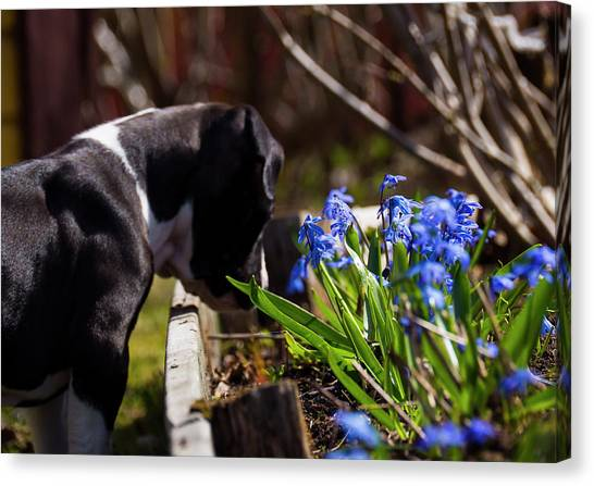 Puppy And Flowers Canvas Print