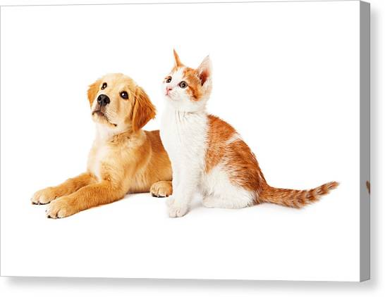 Puppy And Kitten Looking To Side Canvas Print