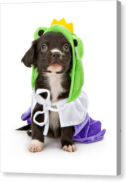Puppy Frog Prince Canvas Print