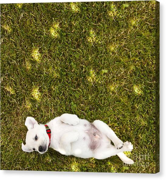 Puppies Canvas Print - Puppy In The Grass by Diane Diederich