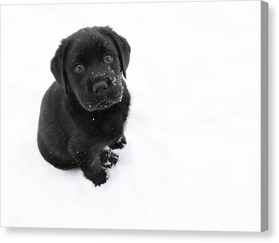 Dogs Canvas Print - Puppy In The Snow by Larry Marshall