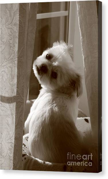 Puppy Pose Canvas Print by Lynn Reid