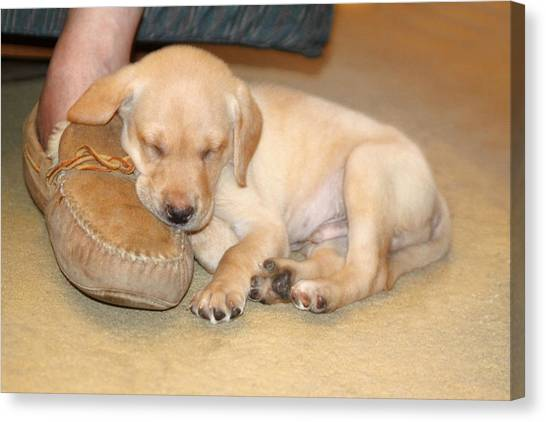 Puppy Sleeping On Daddy's Foot Canvas Print