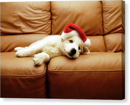 Puppies Canvas Print - Puppy Wears A Christmas Hat, Lounges On Sofa by Karina Santos