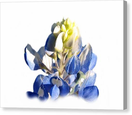 Pure Blue Bonnet Canvas Print