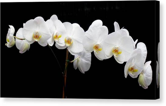 Pure Orchid Canvas Print by Jeanette Oberholtzer