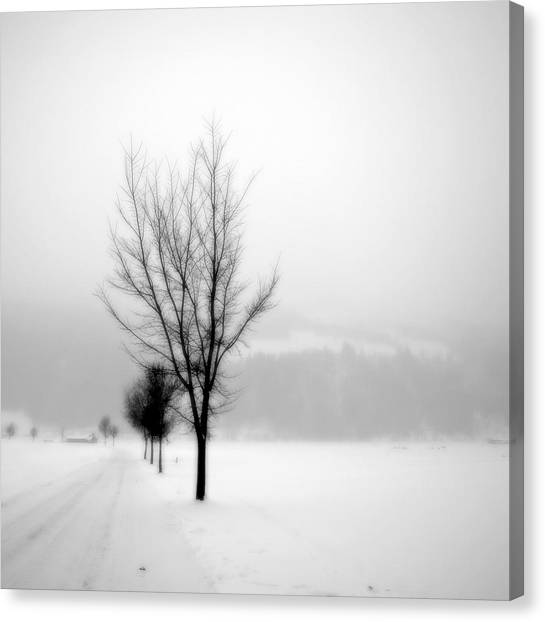 Pure White II Canvas Print