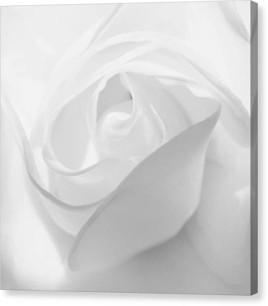 Purity - White Rose Canvas Print